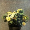 Flowers Pot - Oil on canvas - 40x30cm